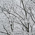 長くて暗いドイツの冬を乗り切る、「冬季うつ」予防法
